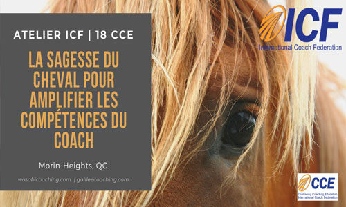 La sagesse du cheval pour amplifier les compétences du coach