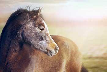 Ce que les chevaux m'ont appris sur ma présence de coach